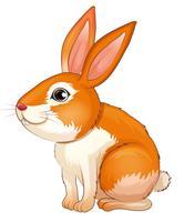 Un grosso coniglio vettore