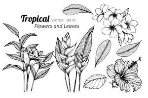 Insieme della raccolta del fiore e foglie tropicali che disegnano illustrazione. vettore