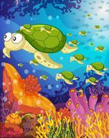 tartaruga in acqua vettore