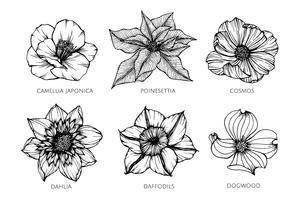 Insieme della raccolta dell'illustrazione dell'illustrazione del fiore.