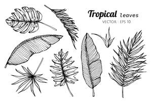 Insieme della raccolta delle foglie tropicali che disegnano illustrazione. vettore
