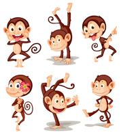 Serie di scimmie vettore