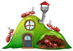 Casa di collina della formica su fondo bianco