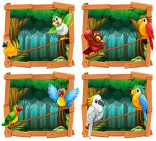 Uccelli selvatici nella foresta