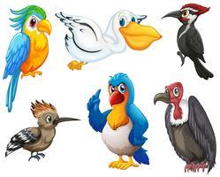 Uccelli vettore