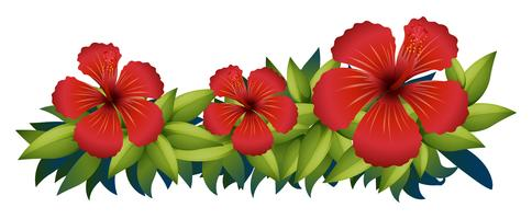 Ibisco rosso nel cespuglio verde vettore