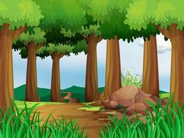 Scena della natura con pista da trekking nella foresta vettore
