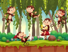 Scimmia nella giungla