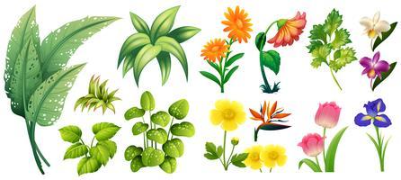 Diversi tipi di fiori e foglie vettore