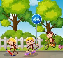 Scimmia in sella a una bicicletta e uno skateboard