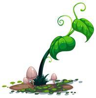 Una pianta verde in crescita