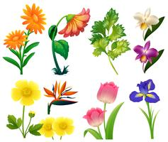 Diversi tipi di fiori selvatici vettore
