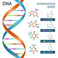 Poster di basi di DNA