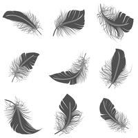 Set di piume nere vettore
