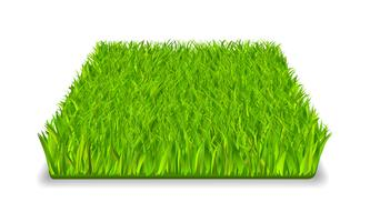 erba verde vettore