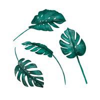 Raccolta isolata foglie di acquerello Monstera