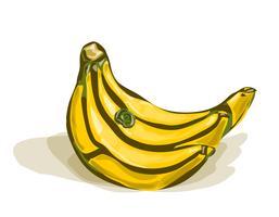 Grappolo di banane vettore