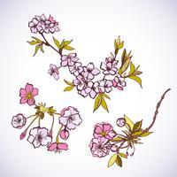 Elementi decorativi in fiore sakura vettore