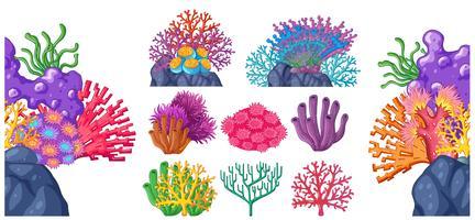 Diversi tipi di barriera corallina vettore
