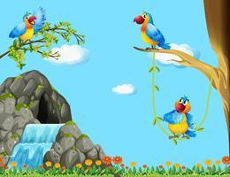 Tre pappagalli vivono nella grotta