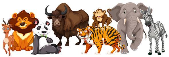 Diversi tipi di animali su sfondo bianco