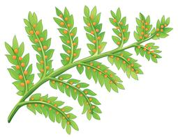 Una pianta di felce vettore