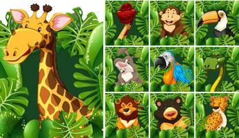 Molti animali selvatici dietro il cespuglio verde