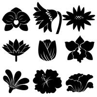Set di fiori neri vettore