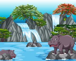 Due ippopotami nella scena della cascata vettore