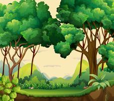 foresta vettore