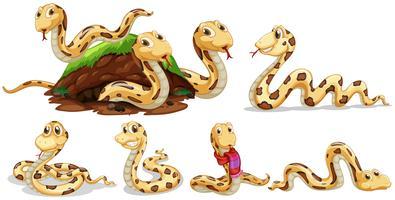 Un set di serpente su sfondo bianco vettore