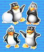 Pinguino vettore