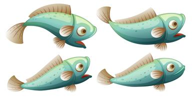 Una serie di pesci su sfondo bianco
