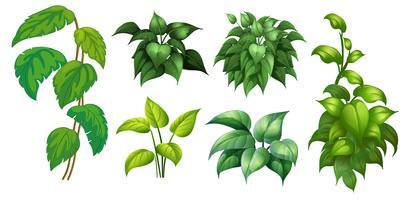 Un insieme di piante verdi vettore