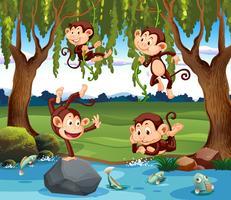 Un gruppo di scimmie in natura vettore