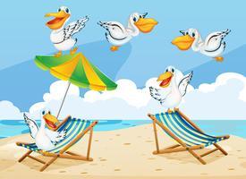 Scena con uccelli pellicani sulla spiaggia vettore