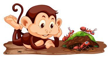 Una scimmia guardando le formiche