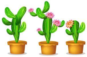 Cactus nel vaso della pianta vettore