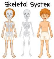 Sistema scheletrico nel ragazzo umano vettore