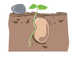 crescita dei semi vettore
