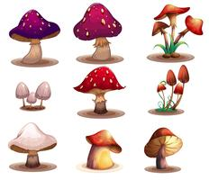 Diversi tipi di funghi vettore