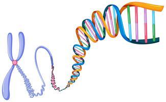 Simbolo del DNA su sfondo bianco vettore