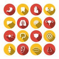 Icone degli organi umani vettore