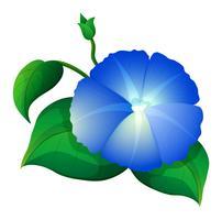 Fiore di gloria di mattina blu con foglie verdi vettore