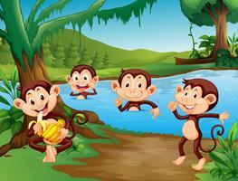 Scimmia che gioca nel lago vettore
