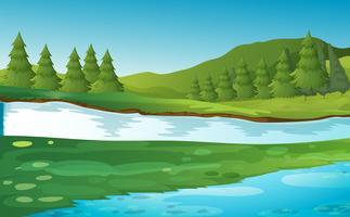 Scena con alberi di pino sul fiume