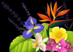 Diversi tipi di fiori su sfondo nero vettore