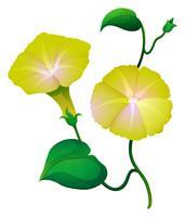 Fiore di gloria di mattina nel colore giallo vettore
