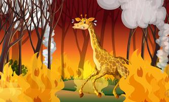 Giraffa che fugge da Firewild vettore
