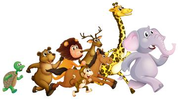 Animali selvatici che corrono insieme